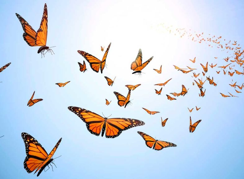 Stretching Out Of Your Comfort Zone. The Story of The Butterfly